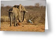 Elephant On The Run Greeting Card
