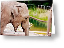 Elephant Open Mouth Greeting Card