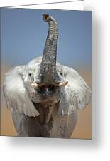 Elephant Portrait Greeting Card