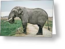 Elephant Roadblock Greeting Card