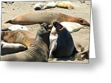 Elephant Seal Birthing Grounds Two Elephant Seal Bulls Fighting Greeting Card by Artist and Photographer Laura Wrede