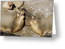 Elephant Seal Confrontation Greeting Card by James L. Amos