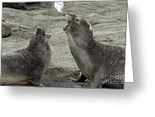 Elephant Seal Confrontation Greeting Card