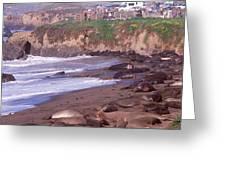 Elephant Seals On The Beach, San Luis Greeting Card