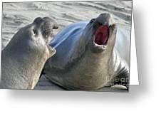 Elephant Seals - San Simeon California Greeting Card