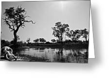 Elephant Skull On Riverbank, Okavango Greeting Card