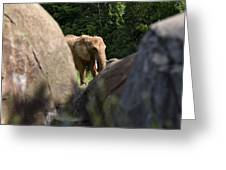 Elephant Spotted Between Rocks Greeting Card