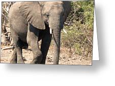 Elephant Stroll Greeting Card