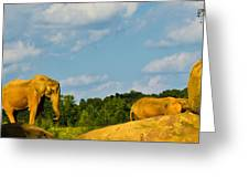 Elephants Among The Rocks. Greeting Card
