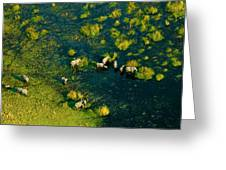 Elephants From Above Greeting Card