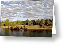 Elephants In Chobe Greeting Card