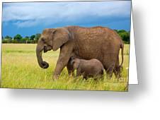 Elephants In Masai Mara Greeting Card