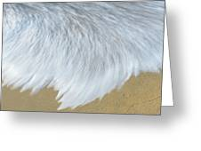 Elevated View Of Waves In Motion, Playa Greeting Card
