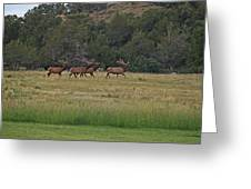 Elk 3 Greeting Card