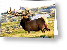 Elk 7 Point Giant Greeting Card by Rebecca Adams