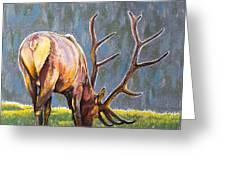 Elk Greeting Card by Aaron Spong