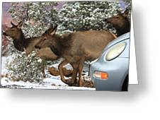 Elk And A Beetle Greeting Card