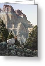 Elk At Cathedral Rock Greeting Card