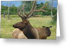 Elk Couple Greeting Card