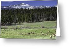 Elk Cows In Beaver Meadows Greeting Card by Tom Wilbert