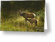 Elk Doe And Fawn-signed  #4465 Greeting Card