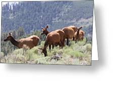 Elk Family - Yellowstone N P Greeting Card