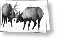 Elk Fighting Black And White Greeting Card
