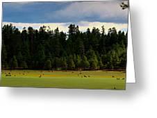 Elk Grazing In The Meadow Greeting Card