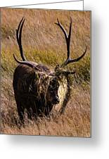 Elk Hairdo Greeting Card