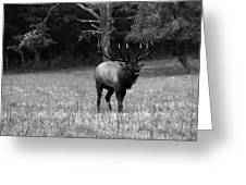 Elk In Black And White Greeting Card