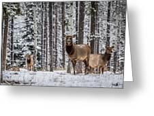 Elk In Jasper Greeting Card