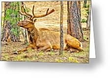 Elk In Kiabab National Forest Arizona Greeting Card