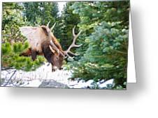 Elk In Snow Greeting Card