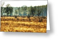 Elk In The Distance No. 2 Greeting Card