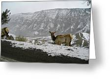 Elk In The Park Greeting Card