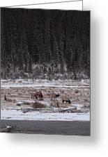 Elk Landscape Greeting Card