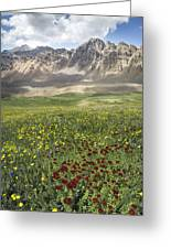 Elk Mountain Wildflowers Greeting Card