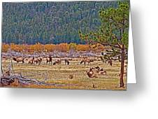 Elk Near Cub Lake Trail In Rocky Mountain National Park-colorado  Greeting Card