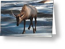 Elk On Ice Greeting Card