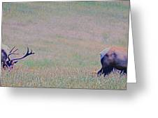 Elk On The Plains 1 Greeting Card