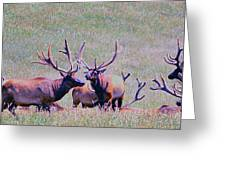 Elk On The Plains 2 Greeting Card