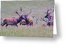 Elk On The Plains 3 Greeting Card