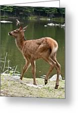Elk Pictures 74 Greeting Card