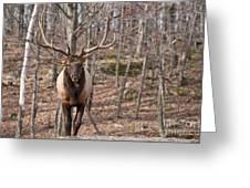 Elk Pictures 86 Greeting Card