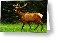 Elk Portrait Greeting Card