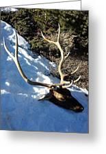 Elk Preservation. Greeting Card
