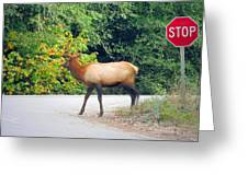 Elk Right Of Way Greeting Card