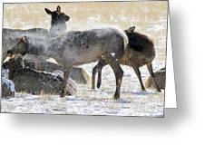 Elk Shaking Off Snow   #0530 Greeting Card
