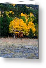 Elks Last Call Greeting Card by Rebecca Adams