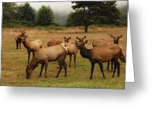 Elks Lodge Greeting Card